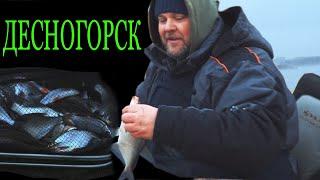 Зимний фидер в Десногорске. Как ловить и что клюет?