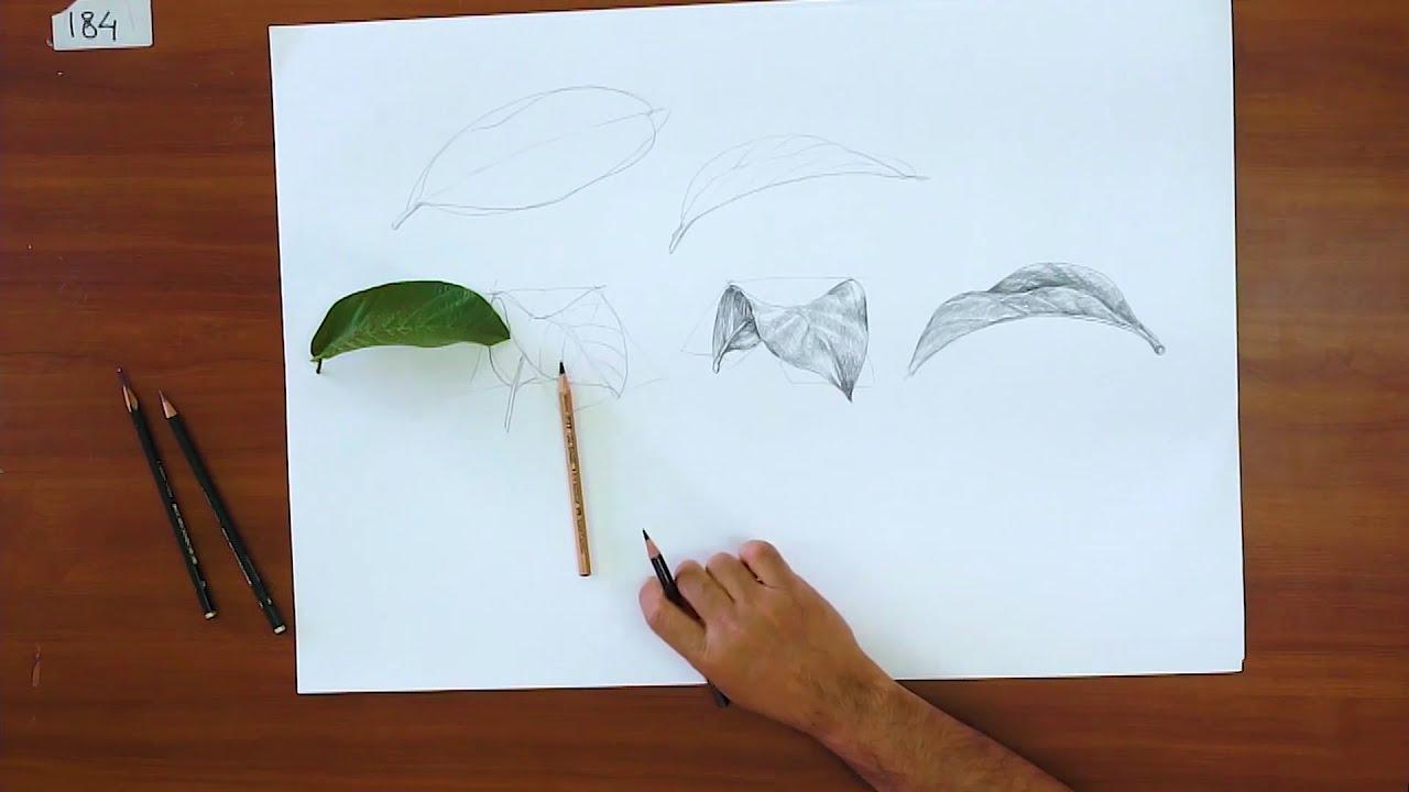 Keren Bagus Menggambar Dasar Basic Drawing Menggambar Daun Menggunakan Pensil Mudah Cara Hebat Di 2020 Rabab Minangkabau
