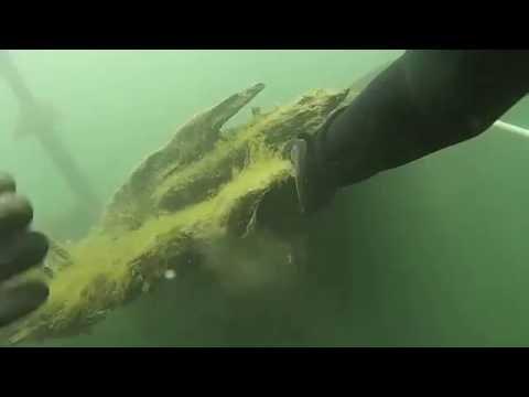 Plongé sur le Conestoga Dive