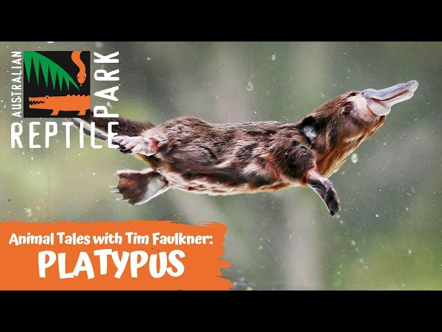 ANIMAL TALES WITH TIM | EPISODE 10 | PLATYPUS