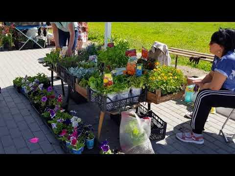 Рынок, покупаю цветы для клумбы/Жизнь в деревне