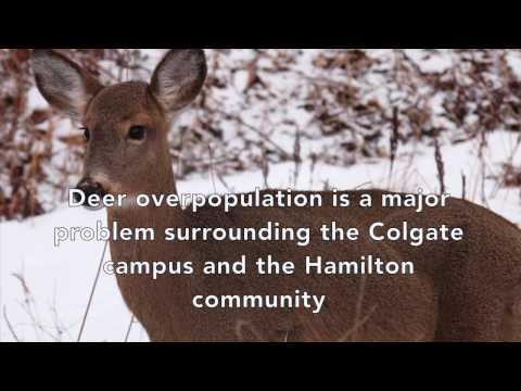ENST390 Colgate and Deer Populations