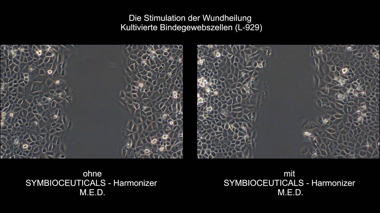 SYMBIOCEUTICALS Harmonizer M.E.D.: Wundheilung