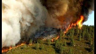 Կրակը մարելու համար 250 մարդ է աշխատում Խոսրովի արգելոցում