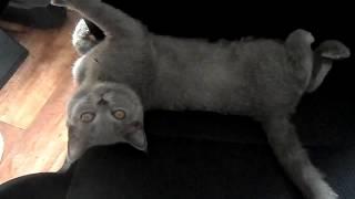 Котенок ворочается на стуле