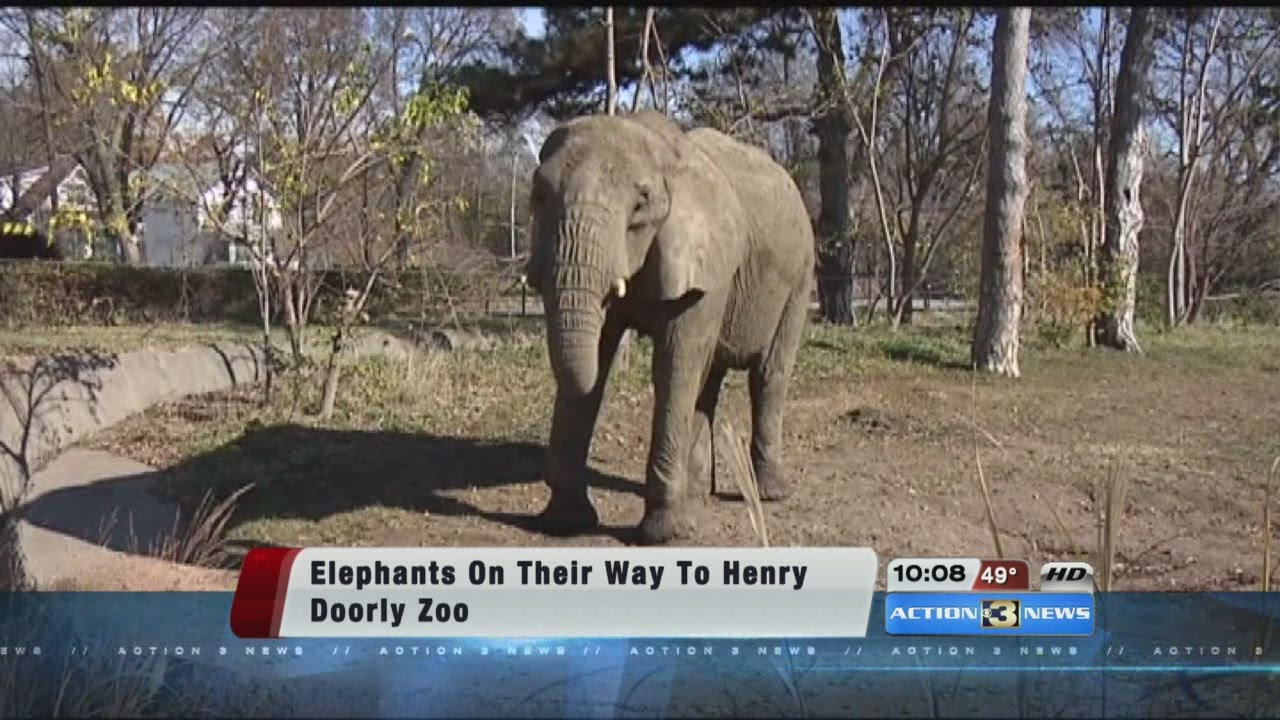 Henry doorly zoo coupon best zoo in the world 2018 omaha s henry doorly zoo nebraska wedding day planning tools inspiration vendors articles publicscrutiny Image collections