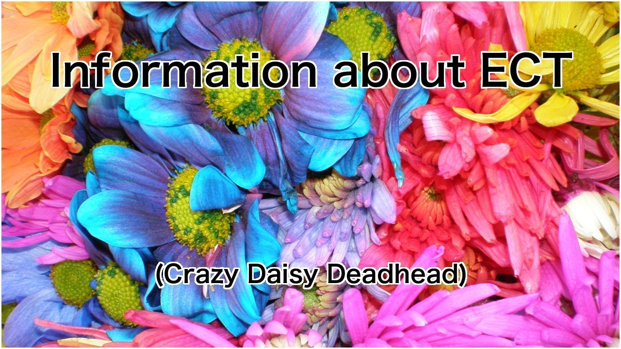 Ect Crazy Daisy Deadhead Repost Youtube