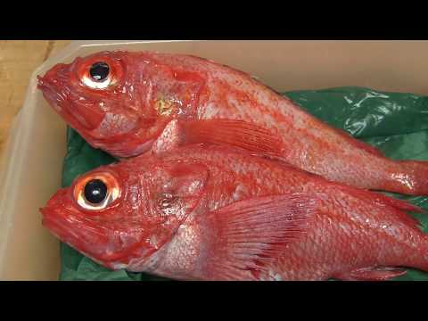 キンキのさばき方~握りになるまでとお刺身の作り方 寿司屋の仕込み how to fillet a Kichiji Rockfish and make sushi