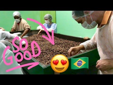 Making Chocolate: Cocoa Tree To Chocolate Bar