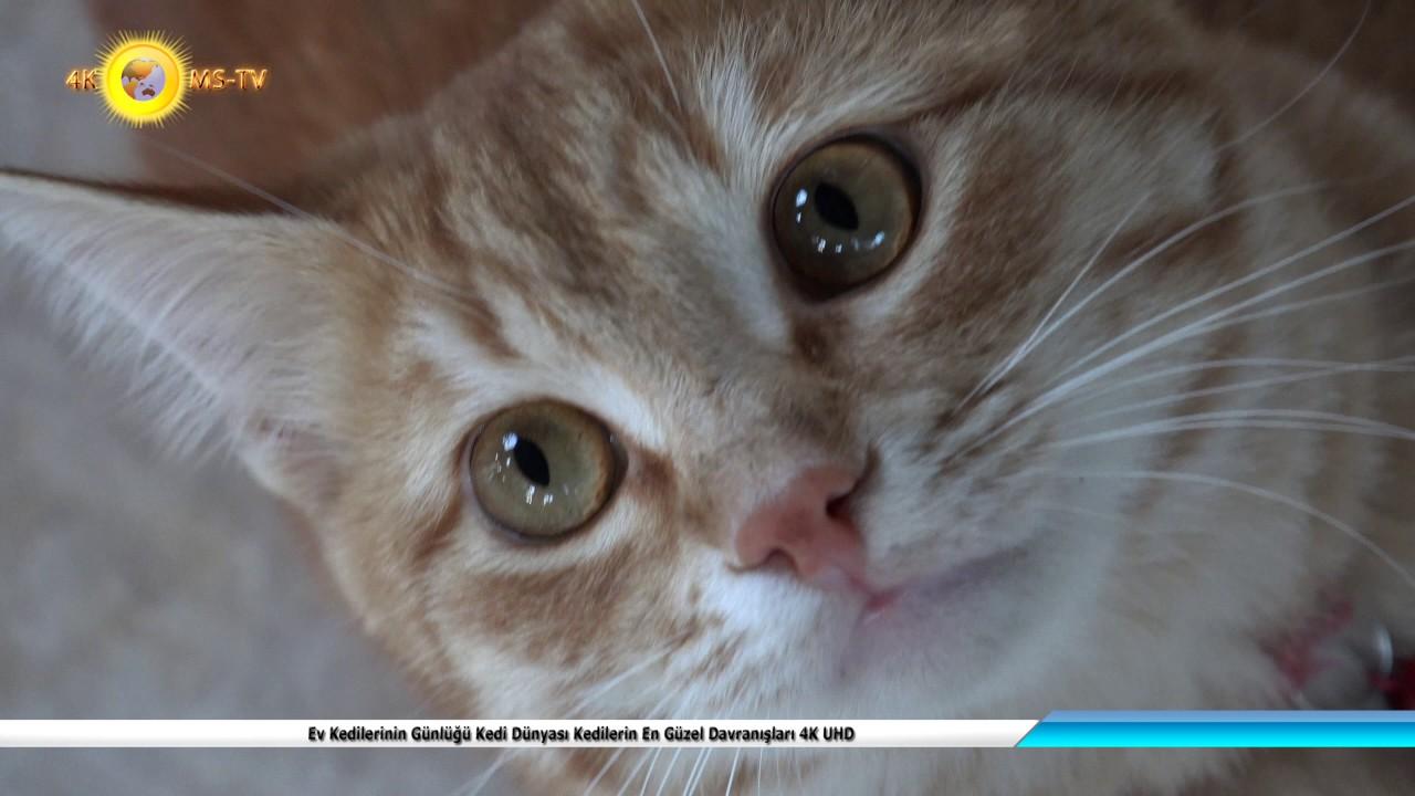 Kedilerin vücut dili ne anlatır