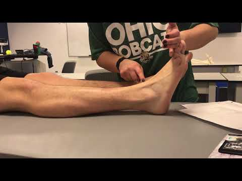 foot palpations clinical skills 1002
