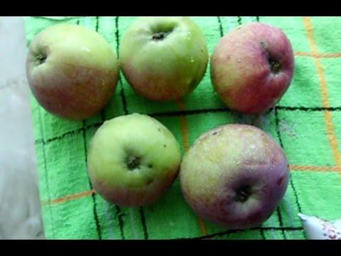 Кефир с яблоком для похудения отзывы