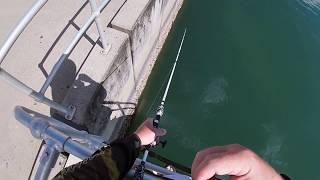 FISHING CAIRNS Location Cairns Harbour-Ep 3