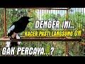 Kacer Gacor Untuk Kacer Malas Bunyi Kacer Langsung On  Mp3 - Mp4 Download