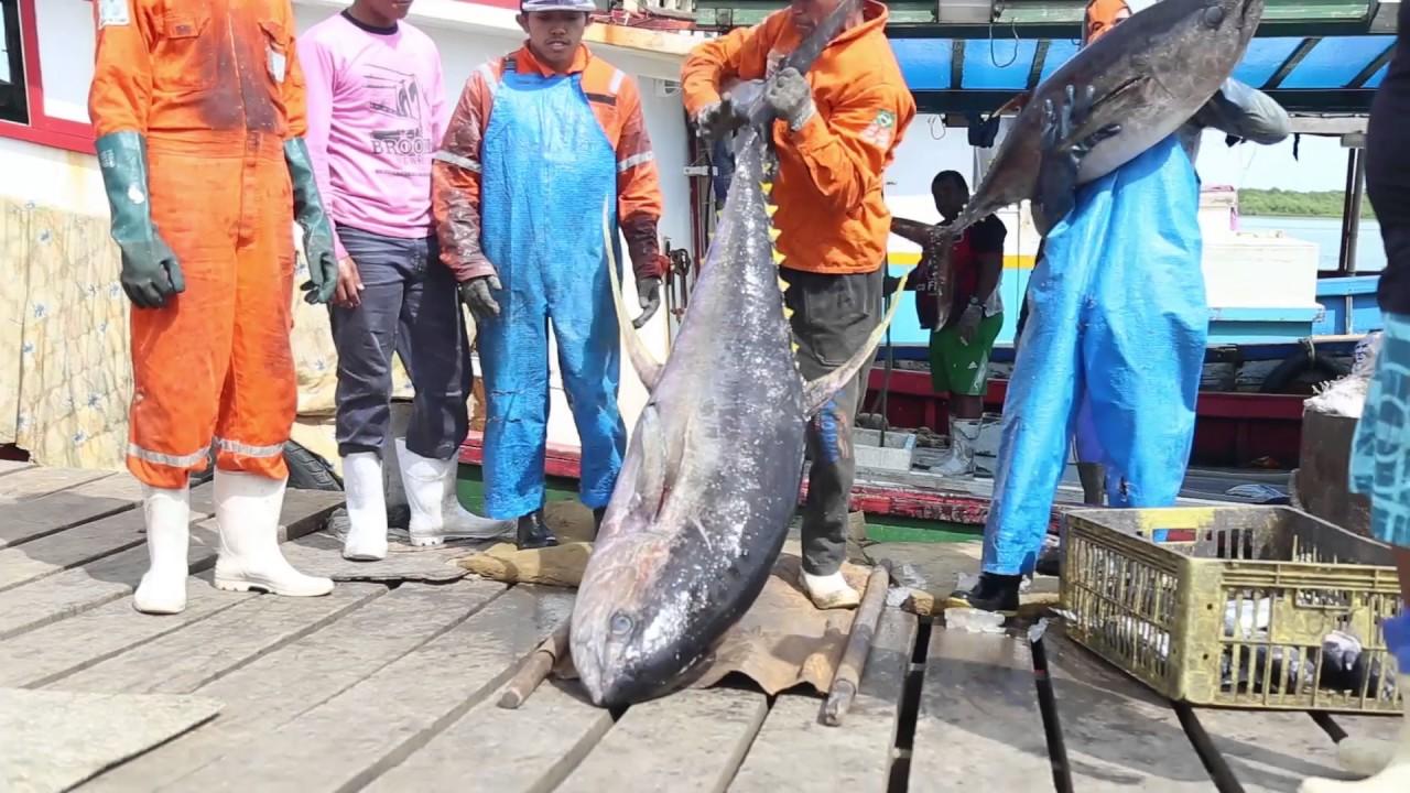 Resultado de imagem para pedro do atum areia branca