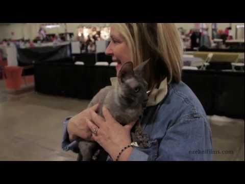 San Diego Cat Fanciers CFA Cat Show 2011