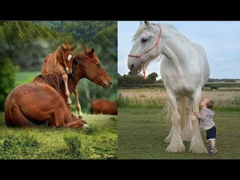 Cute And funny horse Videos Compilation cute moment of the horses Soo Cute! #5