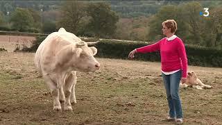 Molphey : départ pour le sommet de l'élevage