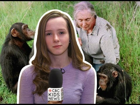 Jane Goodall On Spending Her Life With Chimpanzees I CBC Kids News