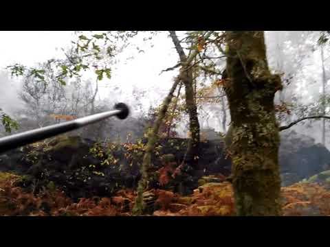 Carballeira resiste grande incendio de eucaliptos, Padróns (Ponteareas)