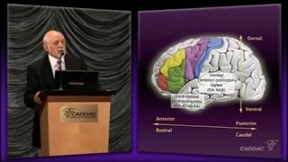 The Neuroanatomy of ADHD and thus how to treat ADHD - CADDAC - Dr Russel Barkley part 1c