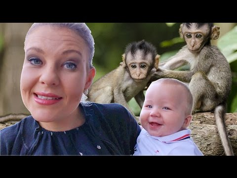 DURBAN VACATION HOUSE TOUR - with MONKEYS!!!   South Africa Vacation