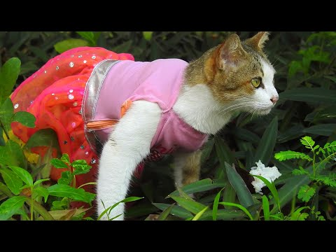 My Cute Cats Wearing Clothes So Joke And Make Me Laugh - My Pets Video episode 1