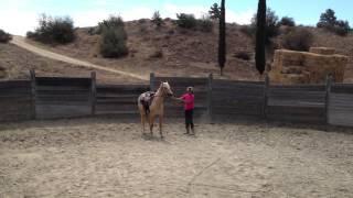 Sassy Horse training
