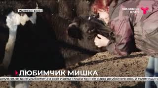 Любимчик Мишка Ишимский район