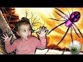 Eclosion d'oeufs d'araignées et dégustation de bonbons globes oculaires ! Spider Arachnide eggs !