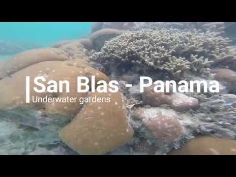 San Blas, Panama  Underwater paradise gardens