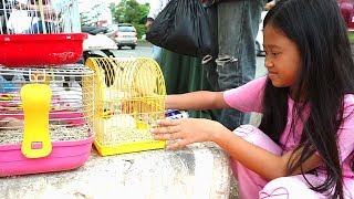 Beli hewan lucu di pinggir jalan raya 💖 serunya main hamster peliharaan baru Jessica Jenica