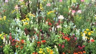 Cottage Garden Design Ideas Pictures