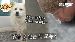 주인을 너무 사랑해서 자신을 못 만지게 하는 개.. ㅣ Dog