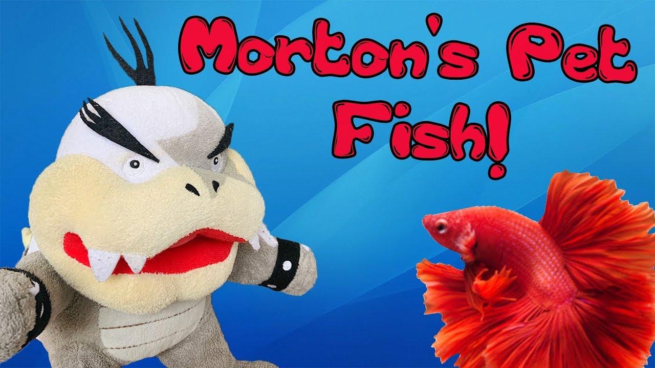 Morton's Pet Fish!