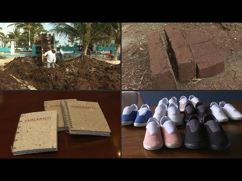 Making bricks, notebooks and shoes out of Sargassum | AFP