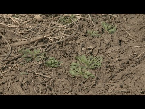 Weed Control - Amit Jhala - March 24, 2017