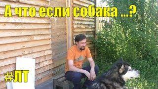 Если собака уходит в лес по следу: что я делаю в этом случае. Если собака встретит дикое животное...