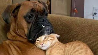 ПРИКОЛЫ С ЖИВОТНЫМИ Смешные Животные Собаки Смешные Коты Приколы с котами Забавные Животные 126