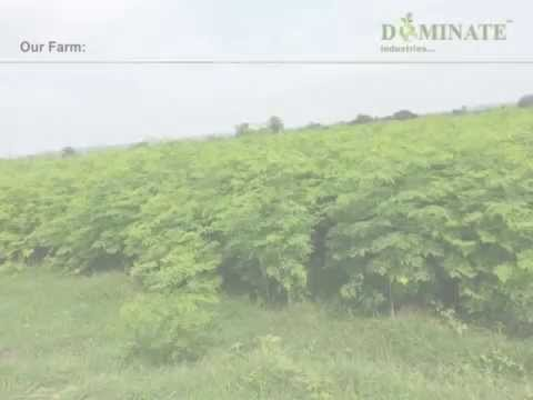 Moringa-Dominate Industries