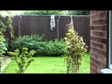 Cat Proof Fencing Enclosure Youtube