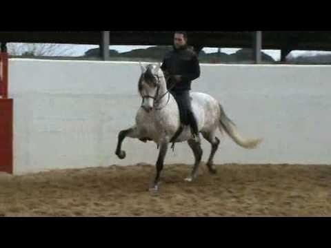 cheval espagnol qui danse