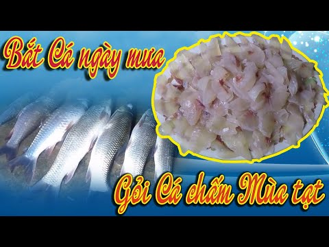 Bắt cá ngày mưa – Gỏi cá giòn chấm mù tạt | Cơm Cày – Cá Kiếm