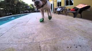 Pawz Natural Rubber Dog Boots (3-Sets)