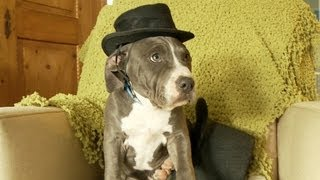 Puppy wearing a small hat, sitting in a big hat
