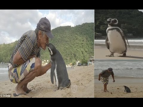 Image result for dindim the penguin rio pic
