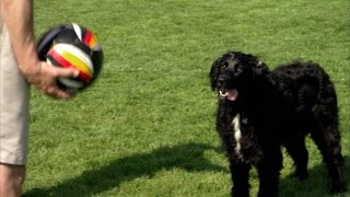 Teach Your Dog To Coach Soccer