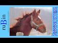 Das ist Q 😍 / Neues Pferd / #ProjektQ 2/2 🦄