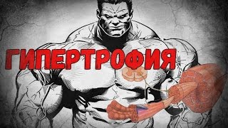 Как растут мышцы. Гипертрофия.(Как происходит рост мышц и почему необходимо постоянно менять программу тренировок. Мышечная гипертрофия...., 2016-11-09T08:36:01.000Z)