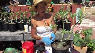 Testing various pruning sealants